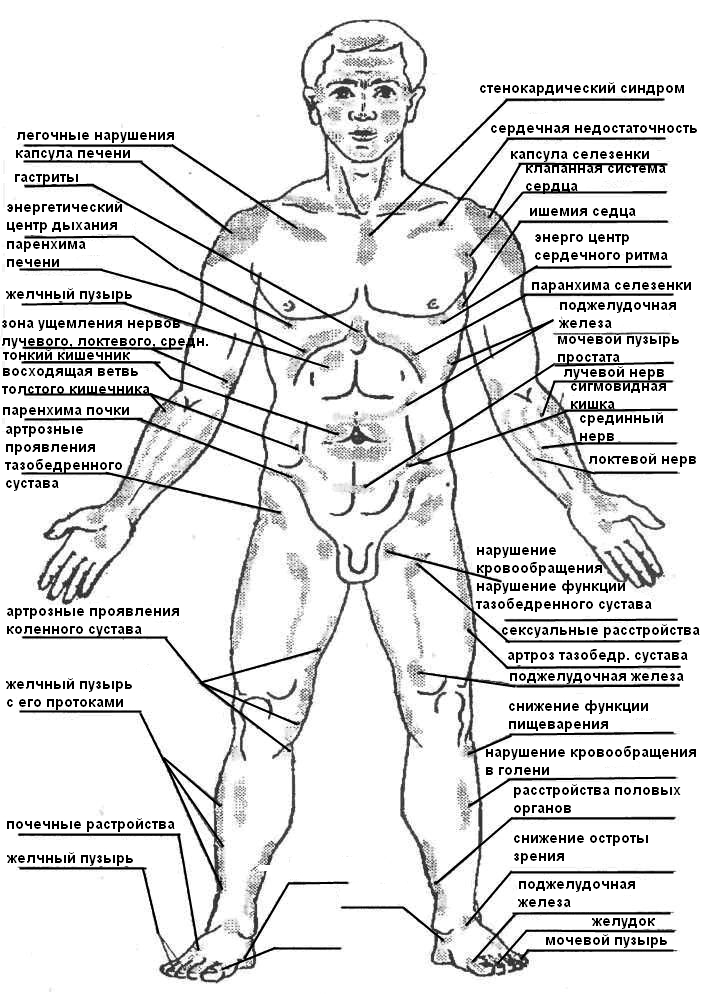 Органы половые